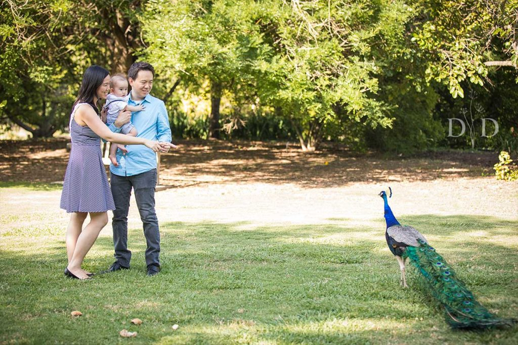 LA Arboretum Family Photo with Peacock