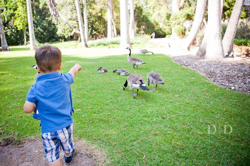 LA Arboretum Family Photography with Ducks