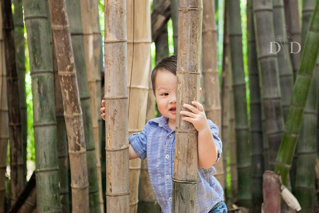 Little Boy in a Bamboo Forest