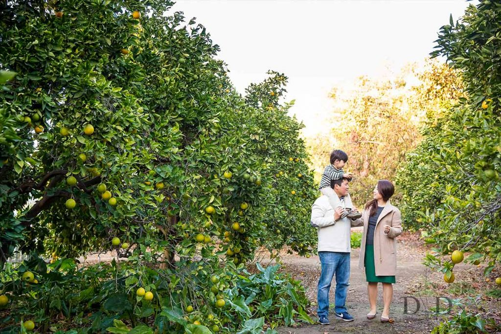 Fullerton Arboretum Family Photography with and Orchard