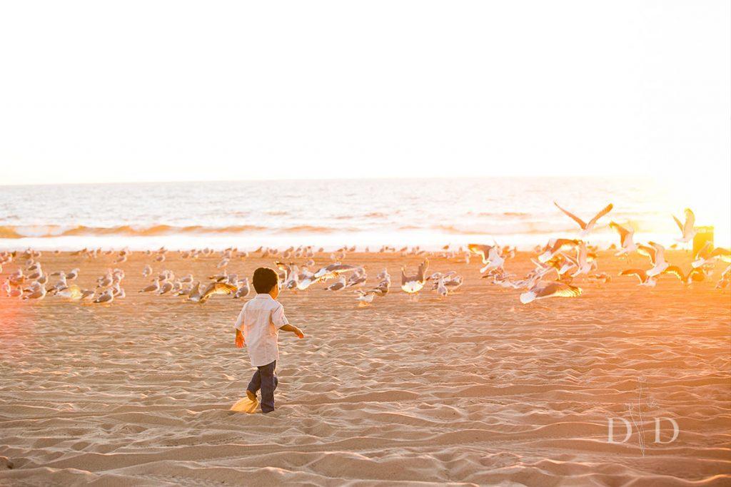 Little Boy Chasing Seagulls