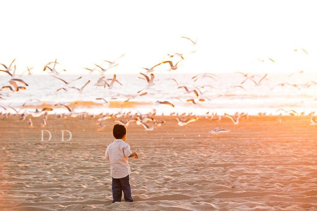 Little Boy Chasing Seagulls at Beach